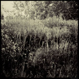 Overgrown Field Photographic Print by Ewa Zauscinska