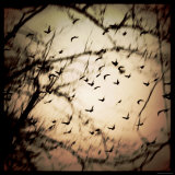 Birds Flying from Tree Photographic Print by Ewa Zauscinska