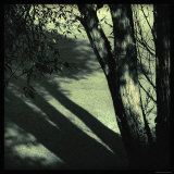 Branch Shadows Photographic Print by Ewa Zauscinska