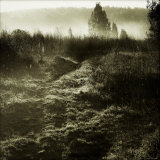 Low Fog on Field Photographic Print by Ewa Zauscinska
