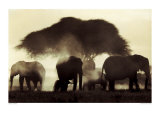 Elephant Silhouettes Prints by Martyn Colbeck
