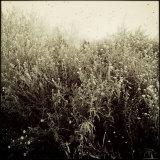 Overgrown Flowers Photographic Print by Ewa Zauscinska