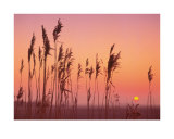 Fenland Sunrise Posters by Rod Edwards