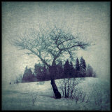 Lone Tree Photographic Print by Ewa Zauscinska