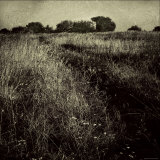 Trail through a Field Photographic Print by Ewa Zauscinska