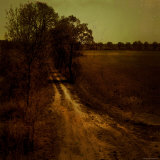 Dirt Trail through Trees Photographic Print by Ewa Zauscinska