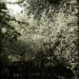 Trees along Fence in Bloom Fotografie-Druck von Ewa Zauscinska