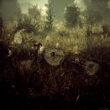 Spiderwebs in Field Photographic Print by Ewa Zauscinska