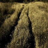 Tracks through a Field Photographic Print by Ewa Zauscinska