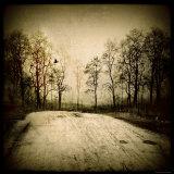 Low Lighting Lot Near Trees Photographic Print by Ewa Zauscinska