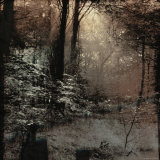 Forest with Peeking Sunlight Photographic Print by Ewa Zauscinska
