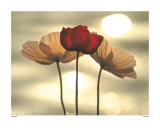 Icelandic Poppies Print by Yoshizo Kawasaki