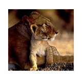 Lioness with Cub Art by Michel &amp; Christine Denis-Huot