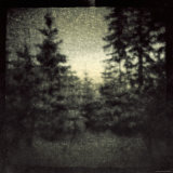 Blurred Forest Photographie par Ewa Zauscinska