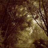 Foggy Trail through Forest Photographic Print by Ewa Zauscinska