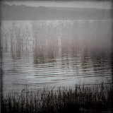 Reeds in Lake Photographic Print by Ewa Zauscinska