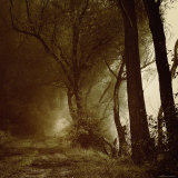 Foggy Path through Forest Photographic Print by Ewa Zauscinska
