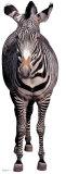 Zebra Cardboard Cutouts