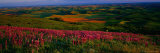 Fields and Wildflowers, Palouse Country, Eastern Photographic Print by Christopher Jacobson