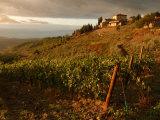 Vineyards, Tuscany, Italy Stampa fotografica di Keith Levit