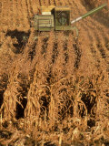 Corn Harvester Photographic Print by Tim Lynch