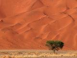 Sand Dunes of Sossusvlei, Namib Desert, Namibia Fotografisk tryk af Keith Levit