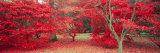 Trees in Fall, Gloucestershire, UK Fotografie-Druck von Peter Adams