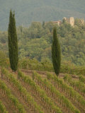 Vineyards, Tuscany, Italy Stampa fotografica di Keith Levit