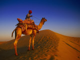 Man Atop Camel, Thar Desert, Rajasthan, India Fotografie-Druck von Peter Adams