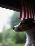 Jack Russell Terrier Near Window with American Flag Photographic Print by Jim Corwin