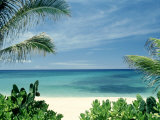 Beach and Palm Trees, Oahu, HI 写真プリント : ビル・ロマーハウス