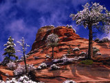Zion National Park In The Snow, Utah Lámina fotográfica por Russell Burden