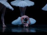 Ballet, Live Performance 写真プリント : キース・レビット