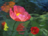 Impressionistic Poppies Photographic Print by David Carriere