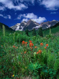 Wild Flowers and Mountain Maroon Bell, CO Photographic Print by David Carriere