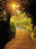 Sunlit Country Lane, Devon, England Photographic Print by Peter Adams