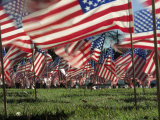 Grassy Field with American Flags Stuck in Ground Photographic Print by Kevin Leigh