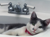 Cat Lying in a Sink Fotoprint van Doug Mazell