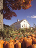 Pumpkins for Sale in Concord, MA Photographic Print by Kindra Clineff