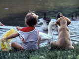 Little Boy and Puppy Looking at Ducks in Pond Photographie par Katie Deits