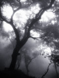 Mist Filled Forest Photographic Print by John Glembin