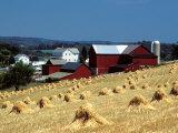 Amish Farm with Sheaves of Wheat Fotografisk tryk af David M. Dennis