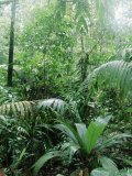 Rain Forest, Costa Rica Photographic Print by Lynn M. Stone