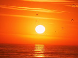 Birds Flying at Sunset, Playa Del Rey, CA Photographic Print by Harvey Schwartz