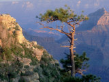 Pine Tree, Grand Canyon National Park, Arizona, USA Photographic Print by Olaf Broders