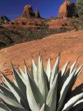 Agave Cactus and Red Rock Formations Photographic Print by Adam Jones