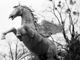 Winged Horse Statue, Mirabellgarten, Austria Photographic Print by Walter Bibikow
