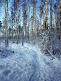 Sweden, Torso, Lake Vanern, Trail Photographic Print by James Denk