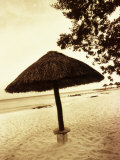 Palapa Umbrella on the Beach, Cancun, Mexico Photographic Print by Daniel J. Cox