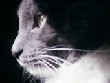 Portrait of a Cat Photographic Print by Debra Cohn-Orbach